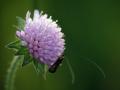 Lepidoptera 1