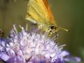 Lepidoptera 2